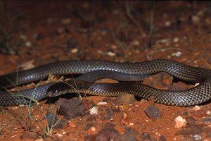 020822_black_snake